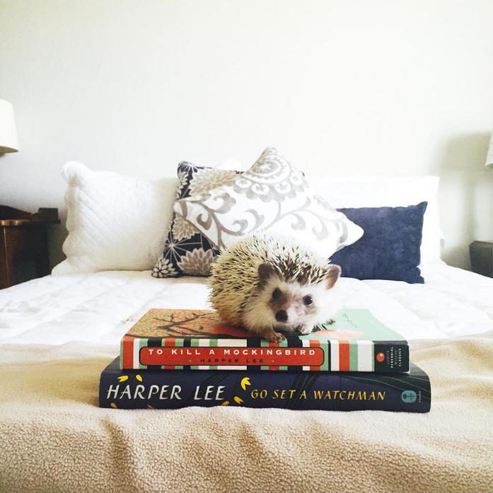 Ernest Hedgingway Bookstagram Popular Book Instagram