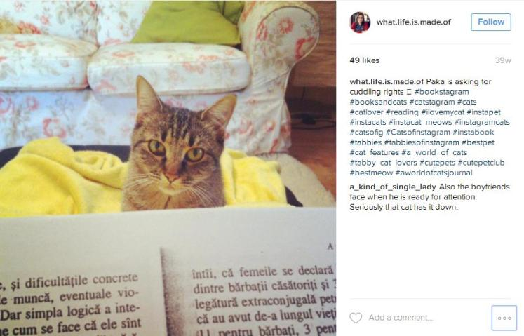 Cats and Books Bookstagram by What Life Is Made Of